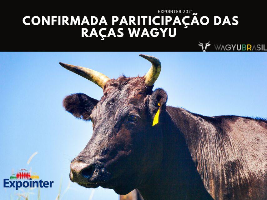Confirmada Participação da Raça Wagyu Kuroge na 44ª Expointer